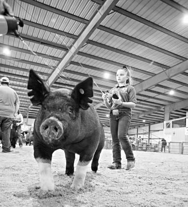 Pictured above, Haidyn Brown of Carney shows her hog at the 2020 Lincoln County Free Fair. Photo/Brian Blansett.